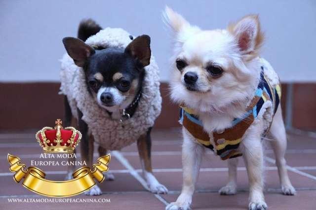 Ropa perros chihuahuas