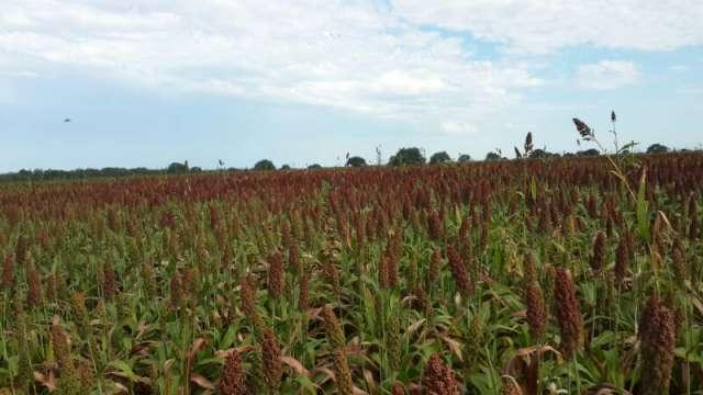 250 agricolas con feed lot 8000 cabezas - argentina