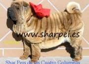 Arrugadisimos cachorros sharpeis 100% americanos sobretipados