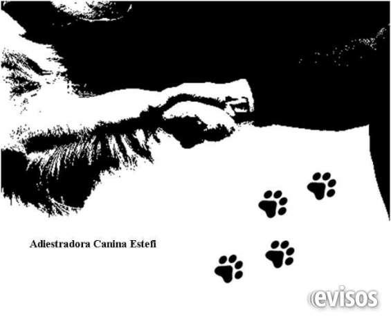 Adiestramiento canino y residencia