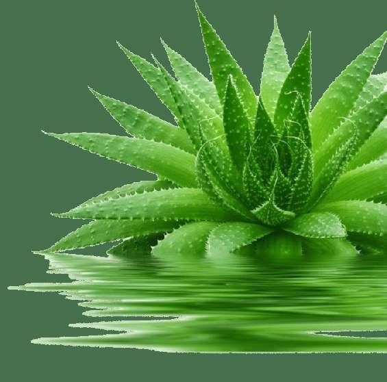 Negocio natural de productos de aloe vera y plantas
