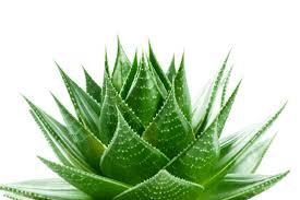 Empresa de nutrición y cosmética natural