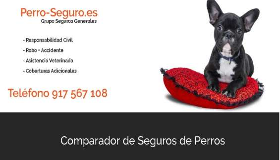 Cmparador de seguros de perros
